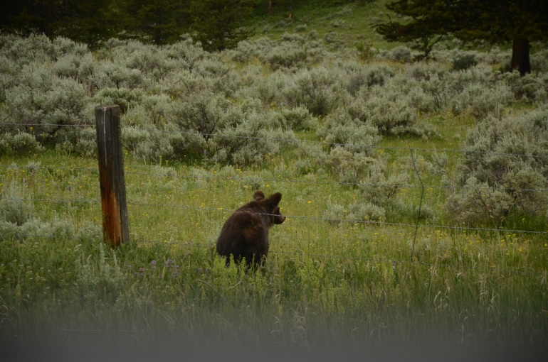 The one where we spotted the bear and started a bear jam
